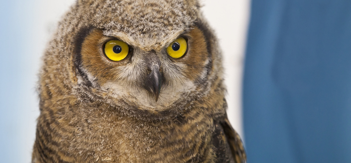 Owlet Naming Contest
