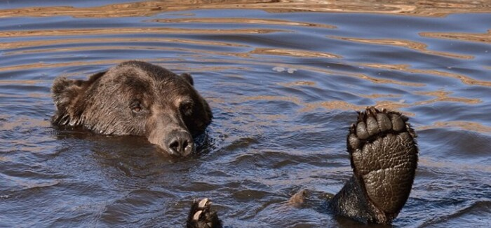 The winning photo by Jacqueline Sinclair in week one of our Bear Discovery contest