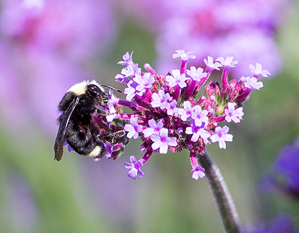 Check out our Pollinators garden filled with bees, flies, butterflies, wasps and much more.