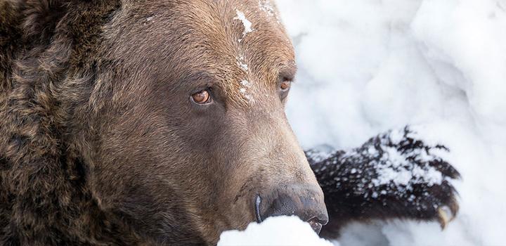 Wildlife Refuge - Ranger Blog | Grouse Mountain - The Peak ...