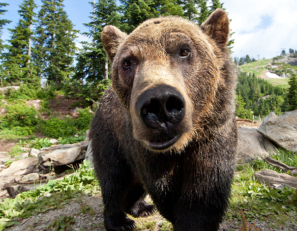 Enjoy a delicious breakfast while learning about our two Grizzlies.