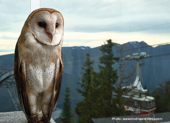 Grouse Mountain hosts large evetns