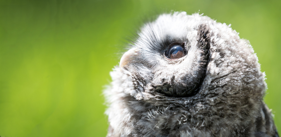 Learn more about owls at Grouse Mountain's Owl Discovery Lunch